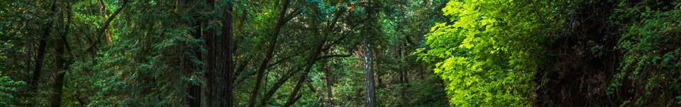 TreesHeader